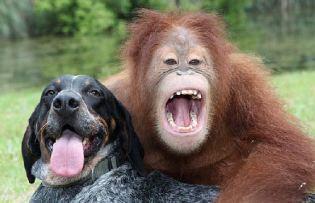 dieren-vriendschap-vriendschap-4