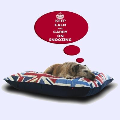 Quint-Brit-Lux-Dog