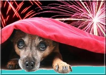 Honden-bang-voor-vuurwerk