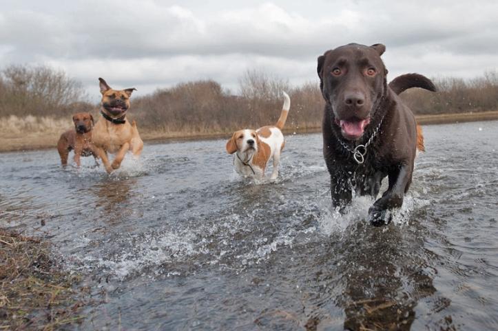 honden uitlaten