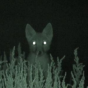 nachtjacht