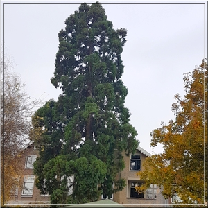 sequoia_dordrecht-1846x1920